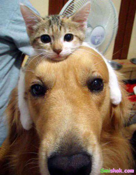 Прикольні фото котів