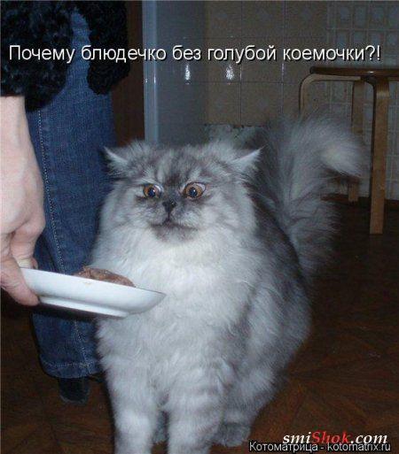 http://smishok.com/uploads/posts/2013-02/1360268780_1360213354_kotomatritsa_ee.jpg