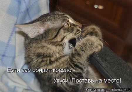http://smishok.com/uploads/posts/2014-03/1395156870_1394801012_kototmatrix_25.jpg