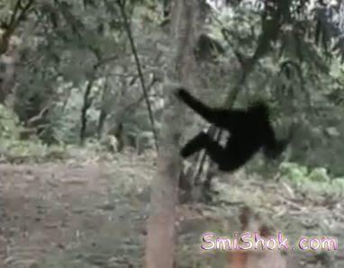 Мавпочки підшутили над...