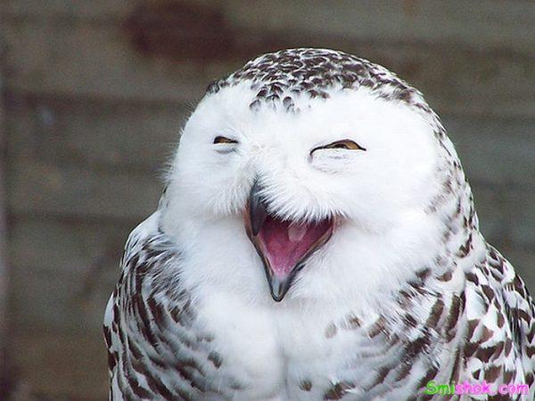 Такий ось позитивний пост з фотографіями усміхнених людей і тварин