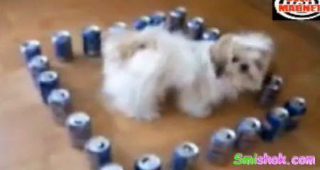 Собака неможе вийти