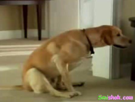 Навіщо собакам туалетний папір?!