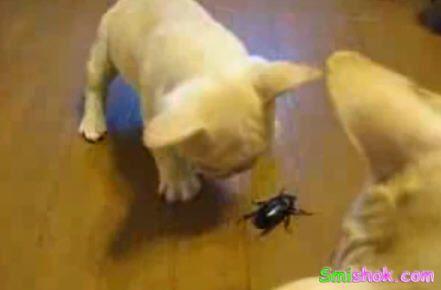 Щеня грає з жуком