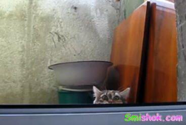 Кіт партизан