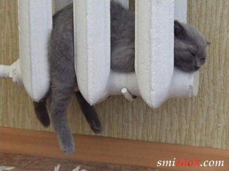 Смішні кішки та кошенята