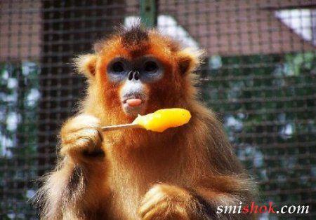 Тварини теж люблять солоденьке