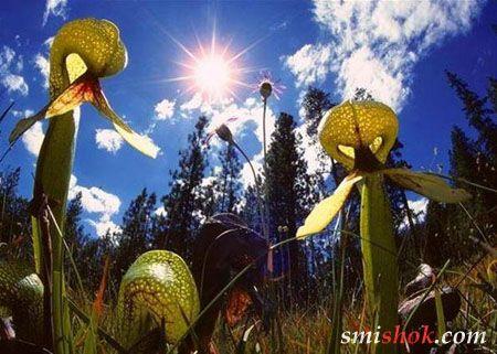 Таємниця інопланетних рослин