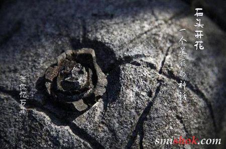 У Китаї ростуть кам'яні квіти
