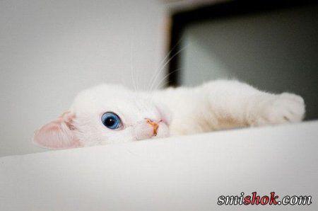 Класні картинки тварин, позитивні фото
