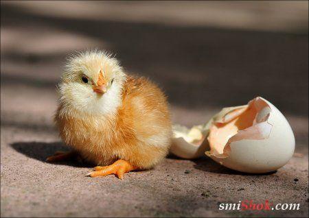 Умиляйтсь, позитивные фото животных