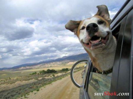 Забавные животные, в нашей новой фотоподборе