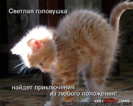 Шкодные котоматрицы