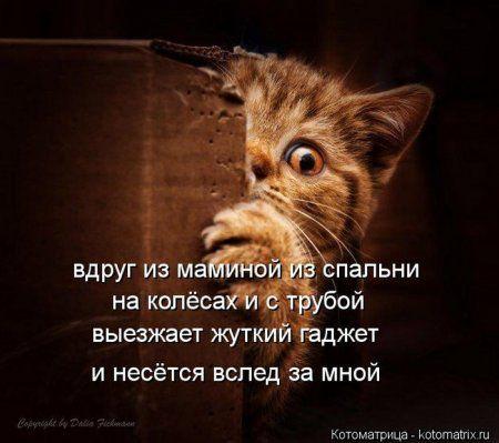 Понедельник не страшен с котомашками. две страницы