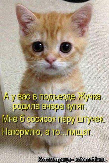 Котоматрица, смотрим и улыбаемся, или на ОБОРОТ :)