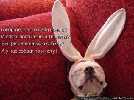 Собакоматрица, свежая подборка