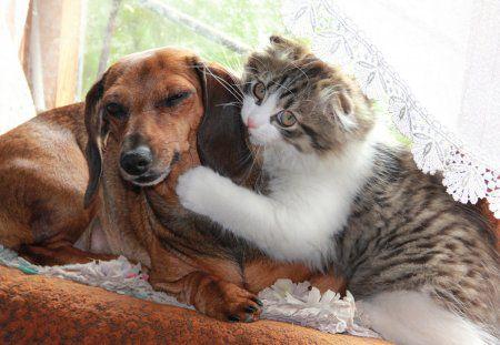 Животные пары. Очень позитивный пост