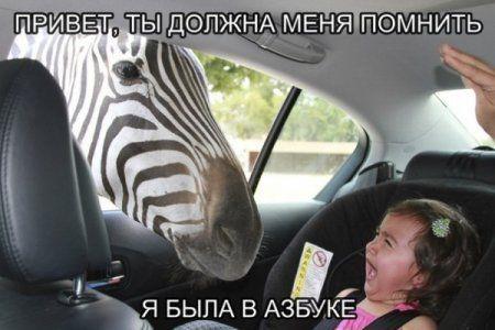 Без юмора живут только глупые