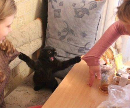 Очень опасный кот, коллекция фотожаб