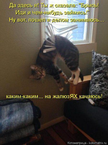 Пятница, последний день зимы - самое время посмеяться над веселыми картинками про кошек