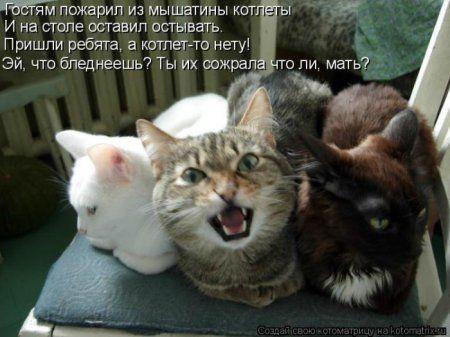 Мартовские коты, собаки и дети - что еще нужно для борьбы с весенним авитаминозом?