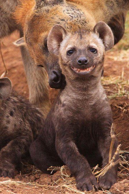 Самые счастливые животные