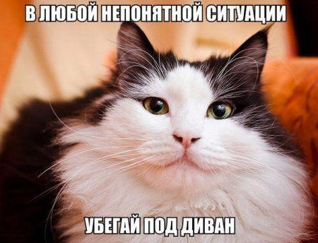 Пост смешных картинок. Фотоприколы кароч