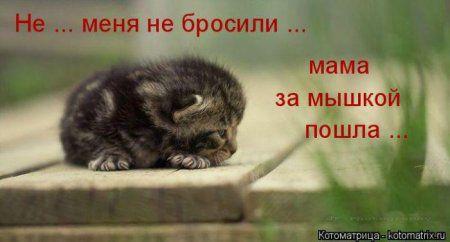 Пятничные котоматрицы)