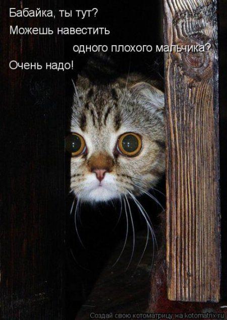 Котоматрица, приколы про животных