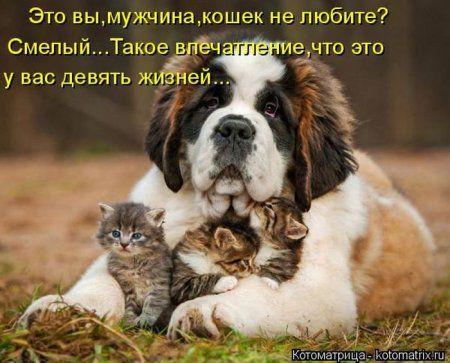 Кото-собакоматрицы
