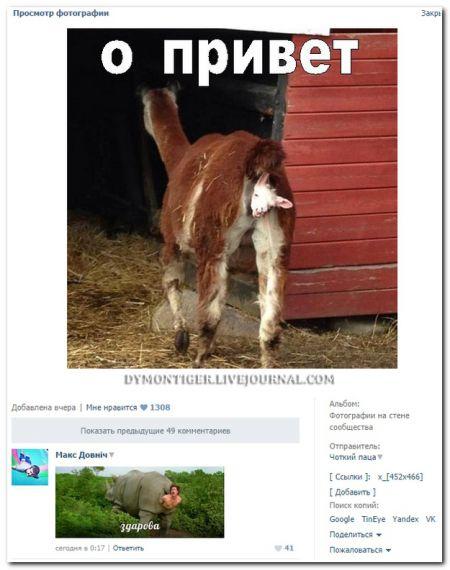 Очередная порция смешных и прикольных комментариев из социальных сетей