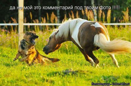 Котоматрицы приколы про животных