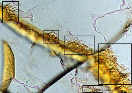 В метеорите с Марса нашли странную структуру