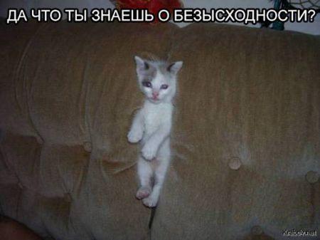Смешные картинки, прикольные фото