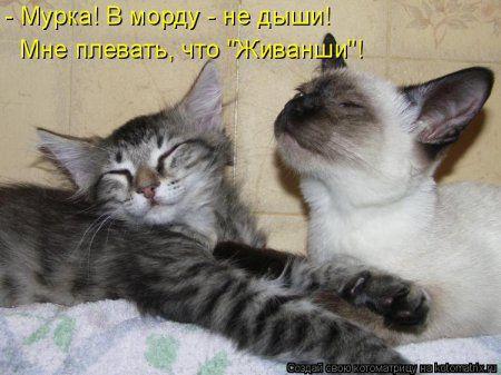 Котоматрицы, прикольная подборка кошек