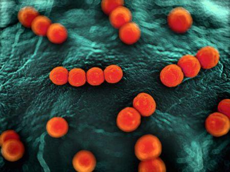 6 объективных причин не бояться микробов