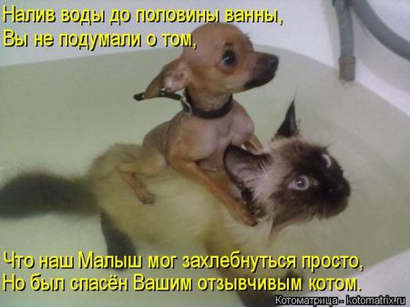 Лучшие котоматрицы недели (43 фото)