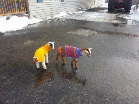 Эти животные знают, как не замерзнуть зимой