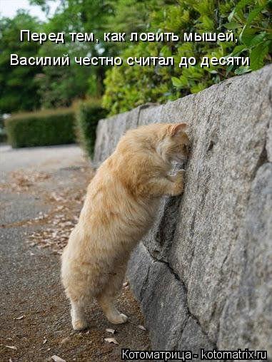Котоматрицы, приколы с надписями про котов
