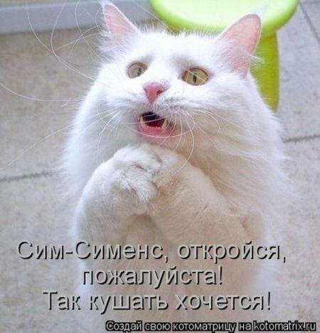 Позитивные котоматрицы почты что Вторника