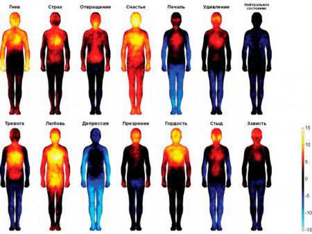 Карта тела: какими своими частями человек чувствует счастье и стыд