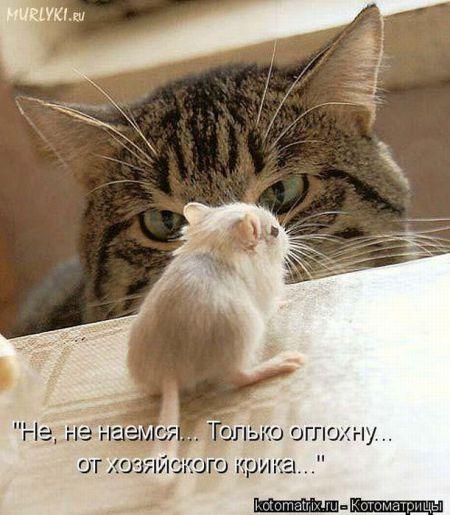 Позитивные и веселые котоматрицы