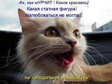 Лучшие котоматрицы недели (49 фото)