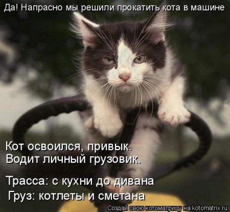 Котоматрицы прикольные и не только с котами