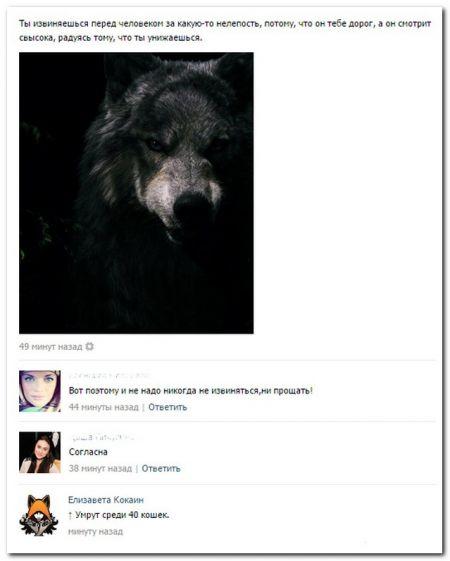 В социальных сетях сегодня пишут (22 фото)