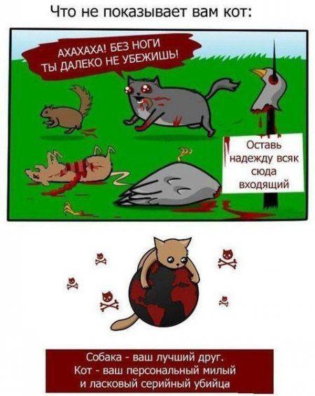 Коротко о котиках