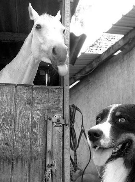 Животные такие как есть, позитивные зверки