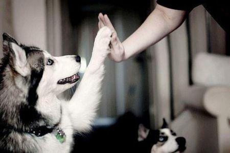10 советов для всех владельцев собак
