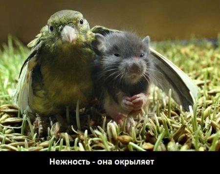 Зверские обнимашки. 15 милейших фото животных