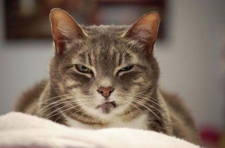 Кошки задумавшие убить своих хозяев